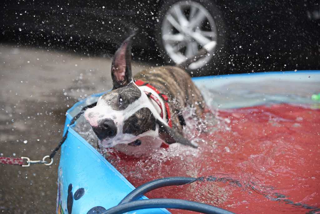 Gallery: Lucky's 4th Annual South Side Dog Festival