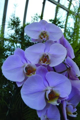 Phipps Conservatory's orchid show a display of floral obsession