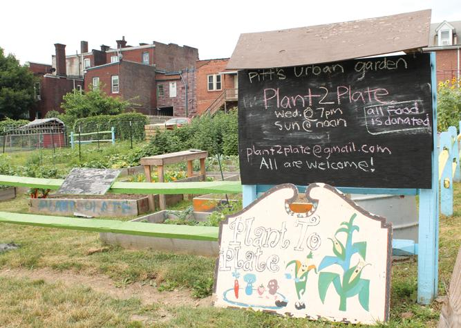 Plant to Plate an urban garden 'oasis' for Oakland, Pittsburgh