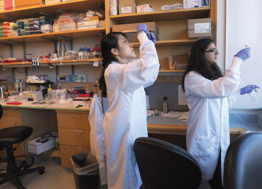 Women in bioengineering
