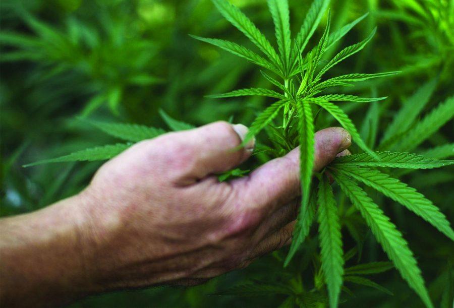 Utilizing medical marijuana effectively