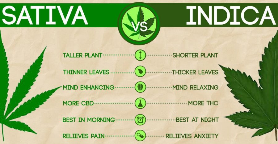 Which+weed+is+which%3A+Experts+compare+pot+strains