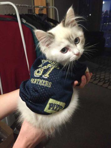 cat-courtesty-web