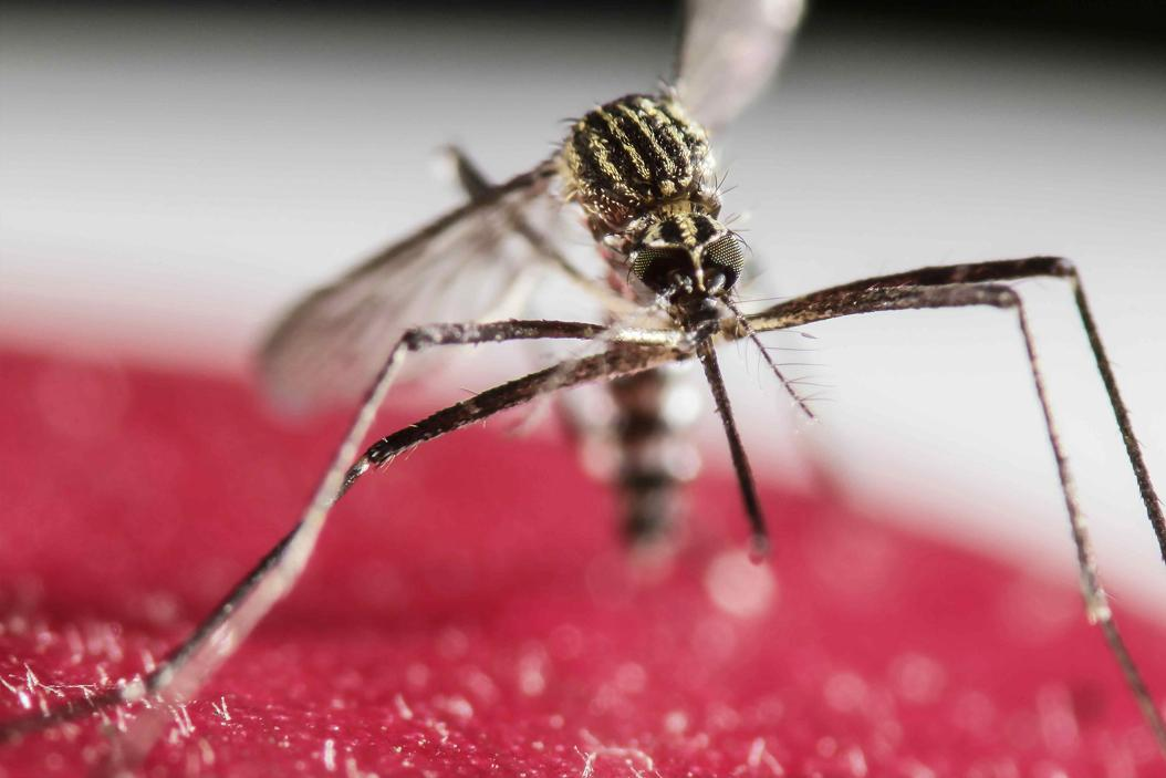 Pitt's School of Medicine has successfully tested a Zika vaccine on mice. TNS