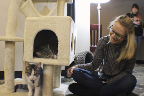 Cats and coffee: Pittsburgh joins growing trend