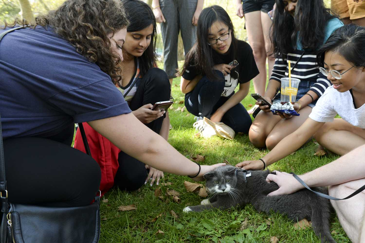 Several people gather around a cat near Mary Schenley Memorial Fountain during Caturday on Monday afternoon. (Photo by Wenhao Wu | Assistant Visual Editor)