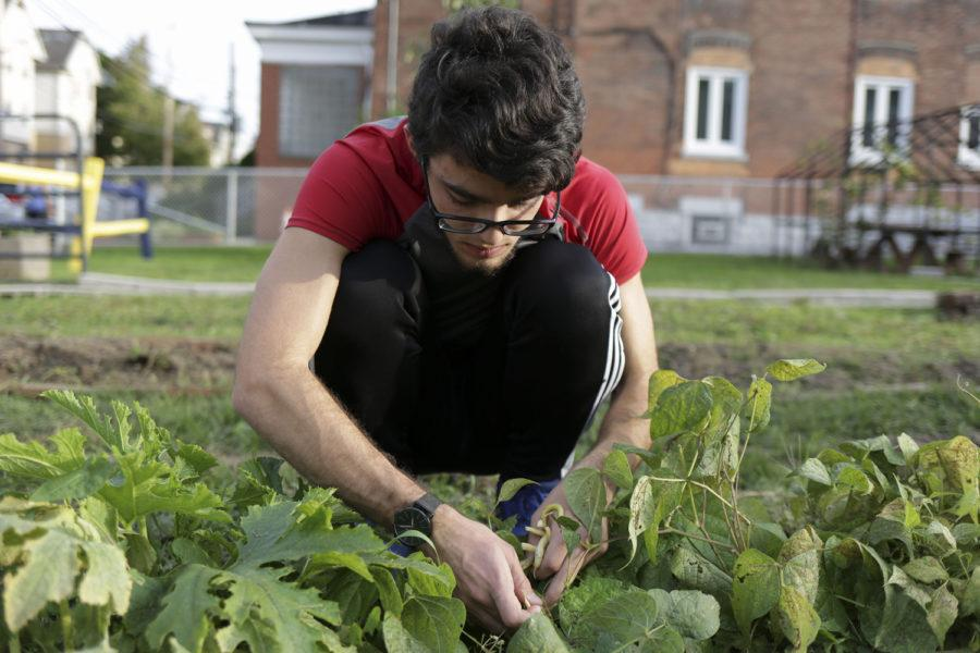 Pittsburgh residents and students are an integral part of maintaining the community gardens. (Photo by Thomas Yang | Senior Staff Photographer)