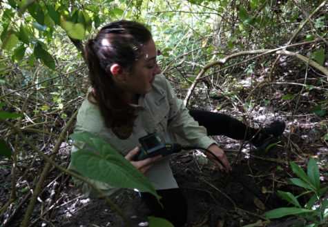 FWC investigator Ashley Lawrence uses a video scope to check a burrow for a monitor lizard spaotted in Davie, Fla. on Wednesday, Aug. 29, 2018. (Joe Cavaretta/Sun Sentinel/TNS)