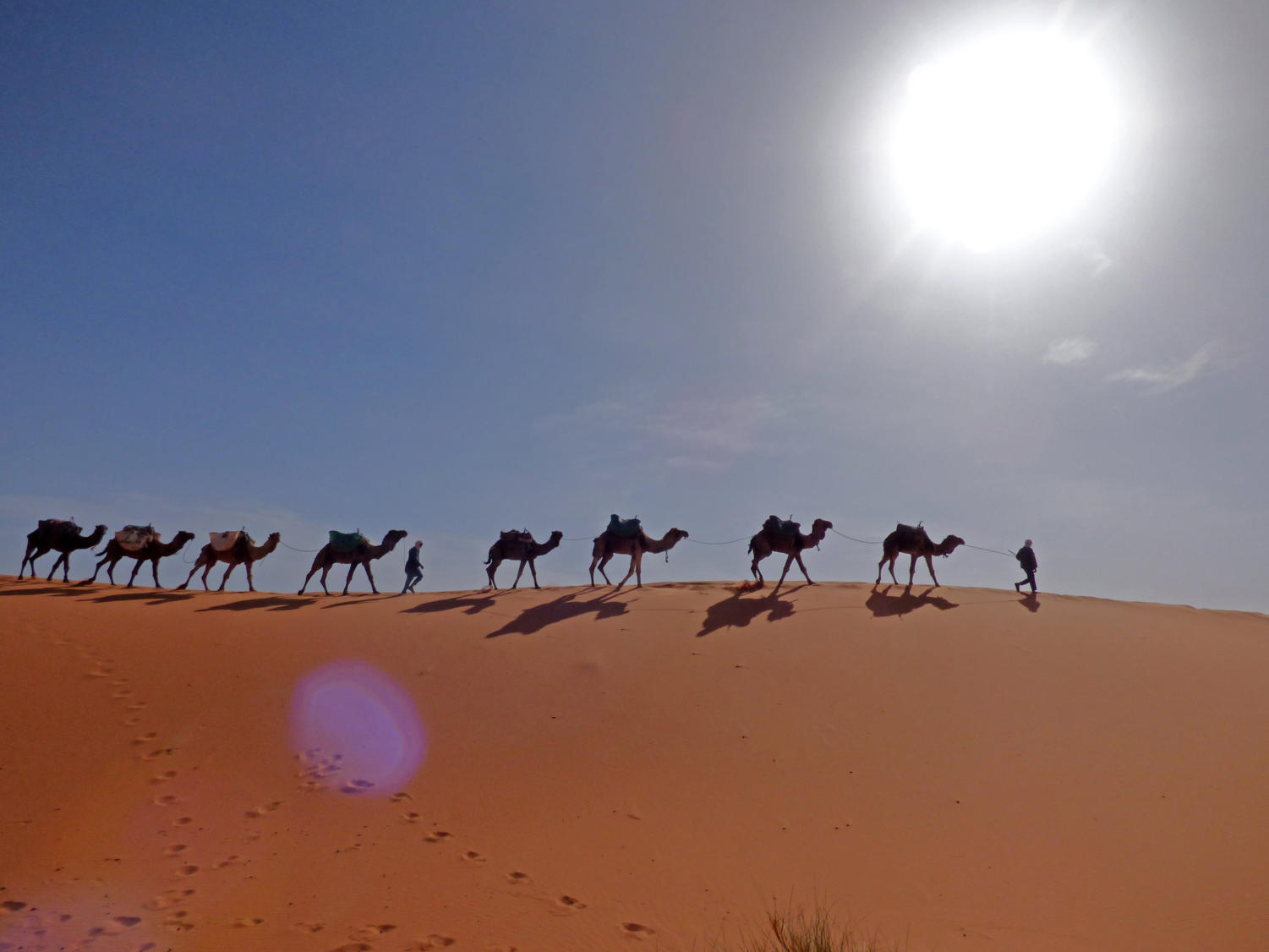 Renewable forms of energy like wind farms can change the climate more directly - including more rain over the Sahara. (Terri Colby/Chicago Tribune/TNS)