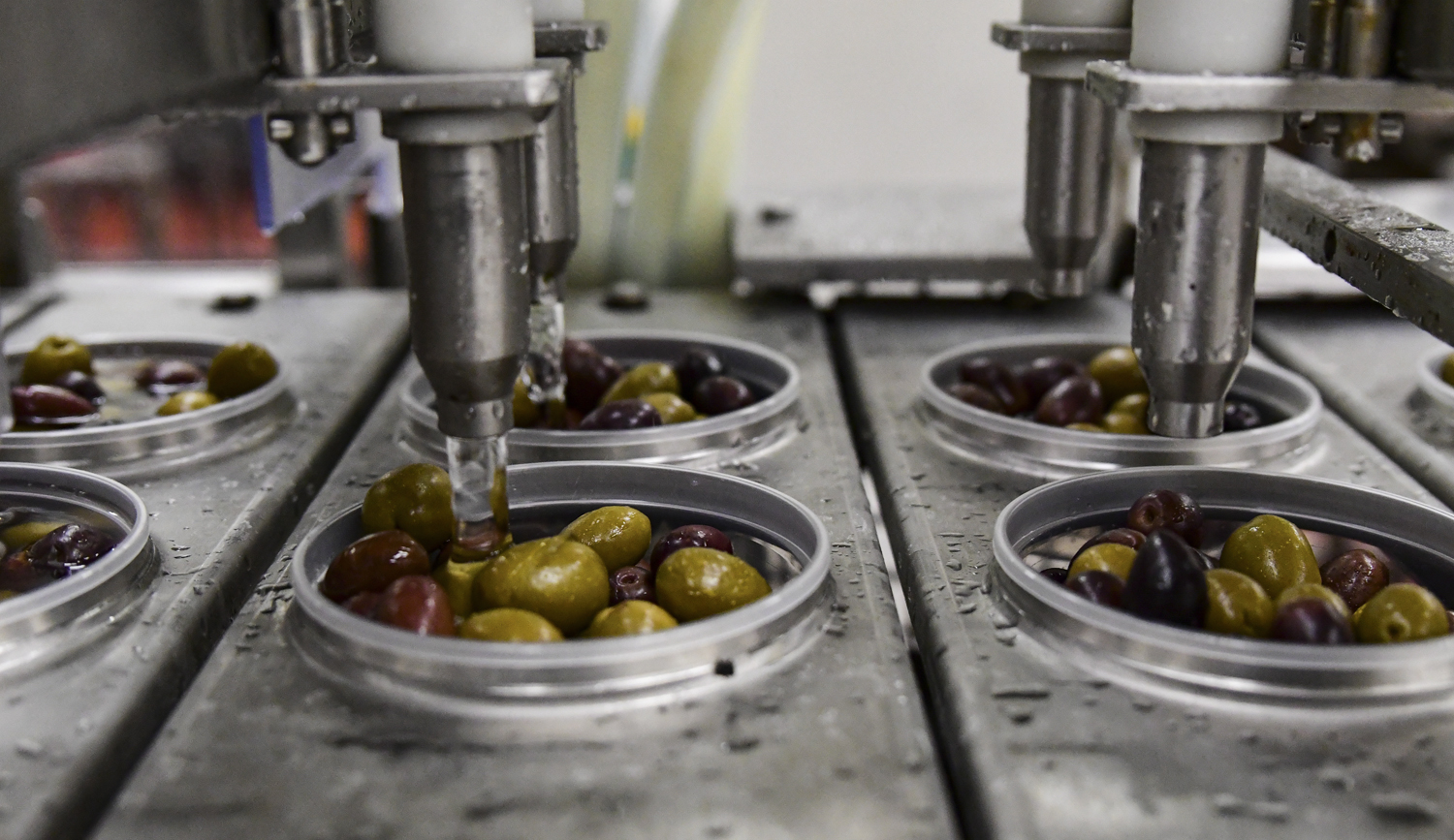 Olives are cleansed with water as they move through the assembly line at DeLallo's olive processing facility.