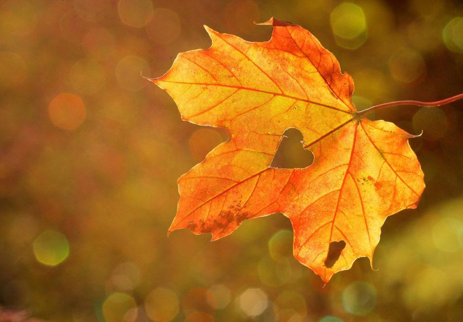 The Artist Autumn