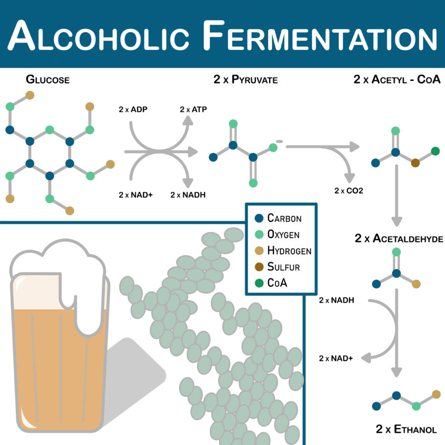 The fermentation process of alcohol