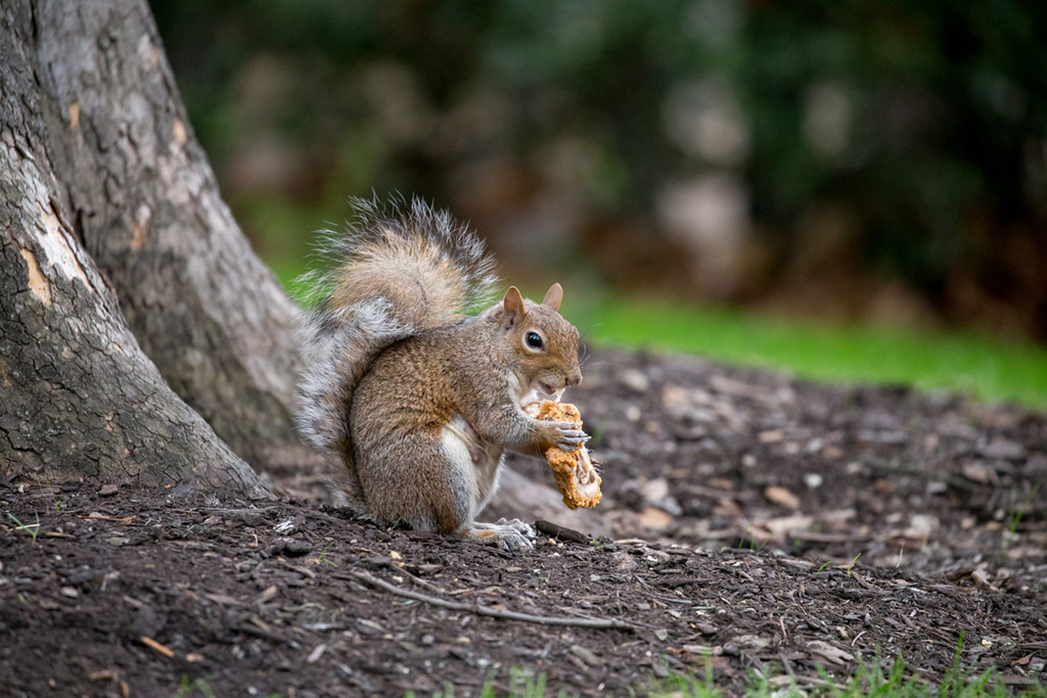 Columnist Allion Dantinne suggests becoming a squirrel to cope with finals.