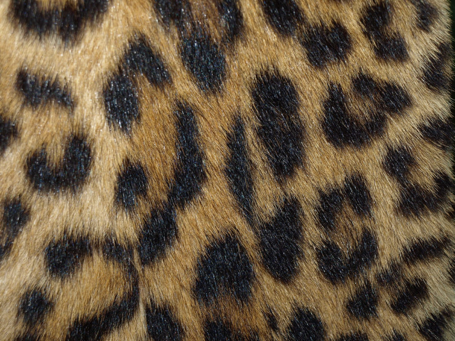 Animal prints are eye-catching.