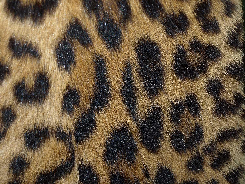 Animal prints are eye-catching.