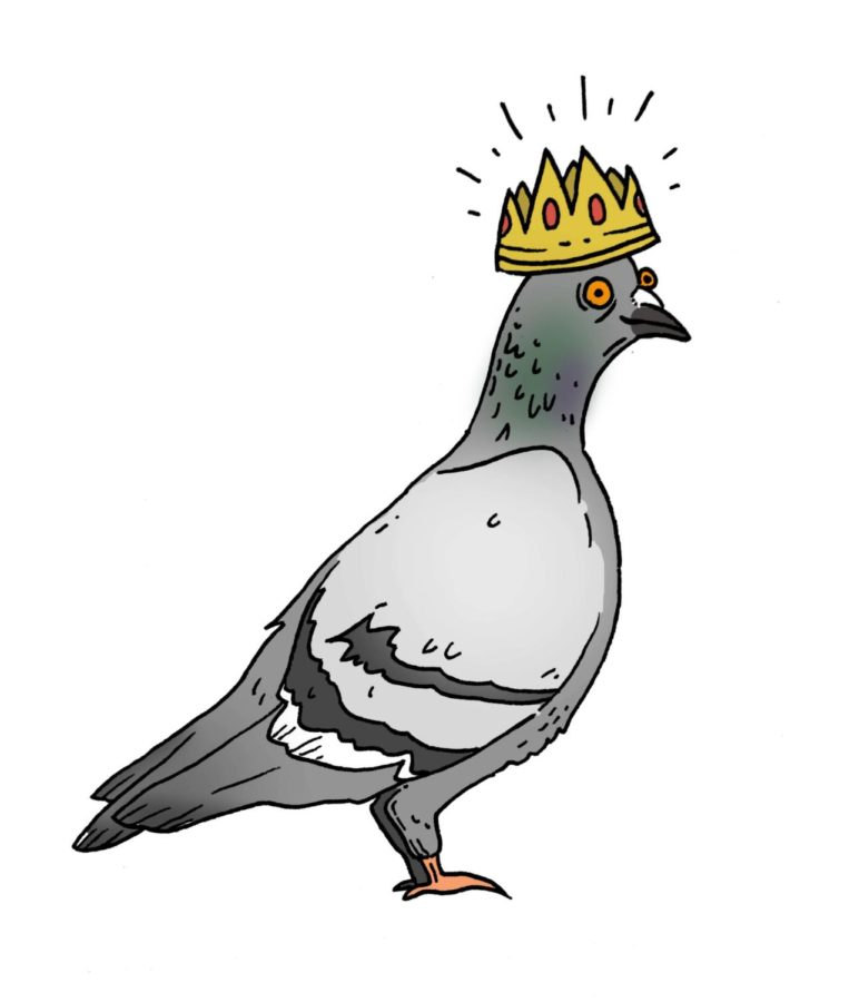 Satire: Vote The Pigeons for Homecoming Court