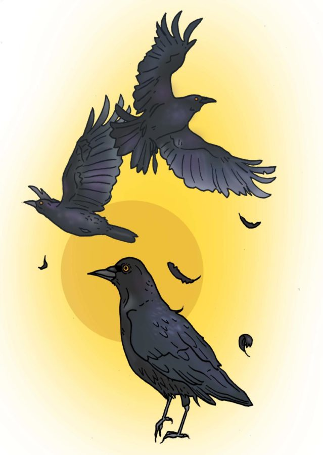 Opinion | Crows on campus: Let them live their lives