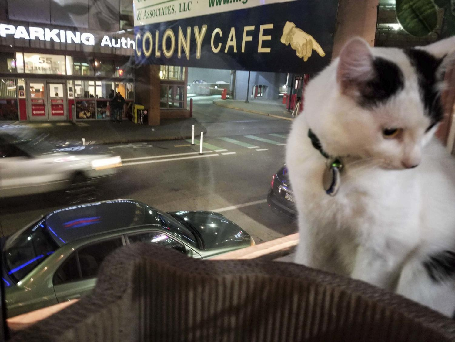 Colony Cafe, located downtown, allows you to study in the same room as adoptable cats.