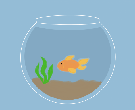 Fish are a popular pet choice among college students.