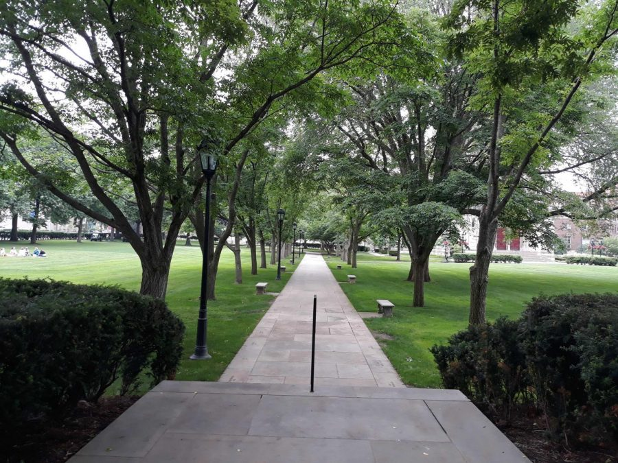 """The Cathedral lawn, one of Pitt's best """"nature"""" spots on campus."""