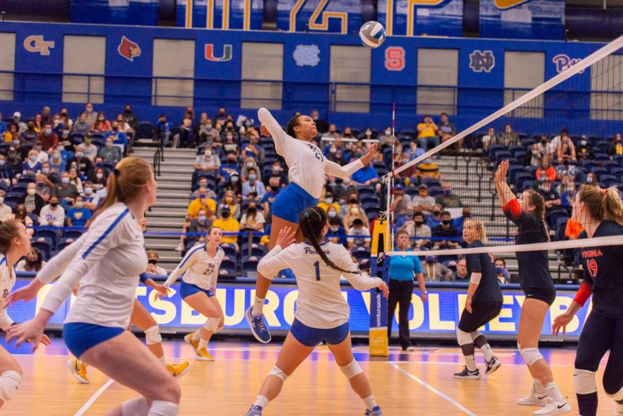 Pitt+Panther+Serena+Gray+sends+the+ball+over+the+net+during+Pitt+vs.+WVB+volleyball+game.+