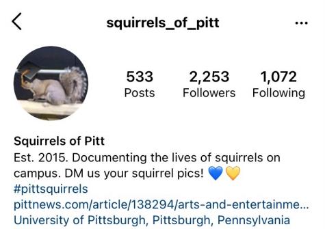 "A screenshot of the Squirrels of Pitt Instagram account asks Pitt students to DM them ""squirrel pics."""
