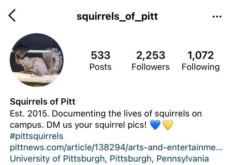 A+screenshot+of+the+Squirrels+of+Pitt+Instagram+account+asks+Pitt+students+to+DM+them+%E2%80%9Csquirrel+pics.%E2%80%9D
